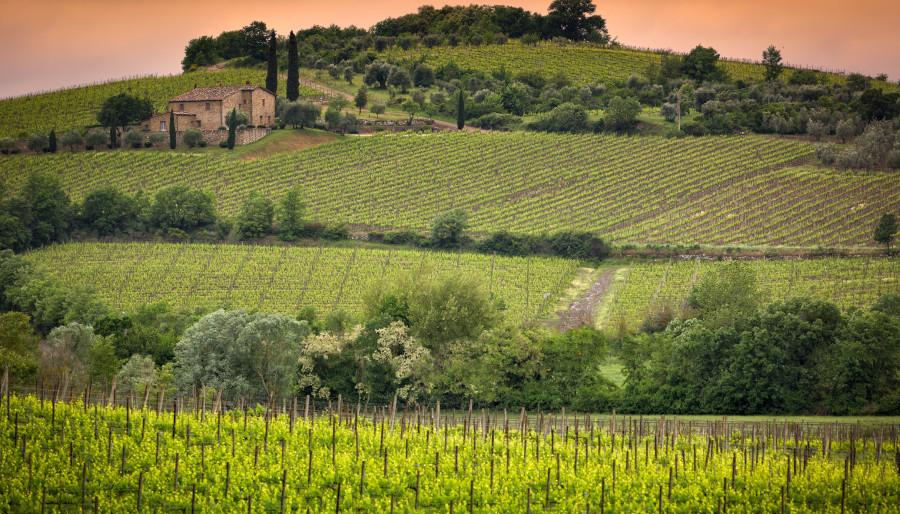Биозаштита за вашето вино и вашиот бренд